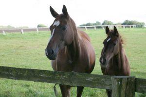 Tierhalterhaftpflichtversicherung Vergleich